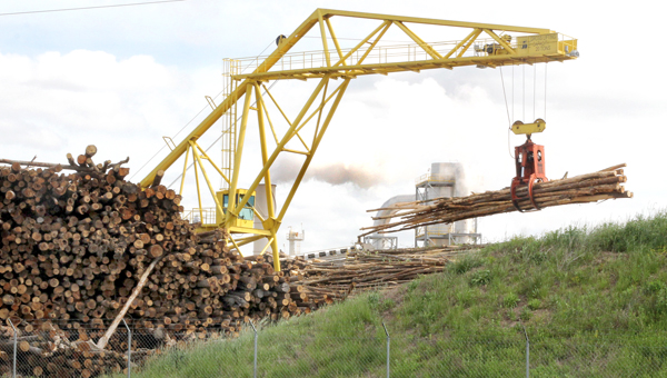 An overhead crane at Enviva of Ahoskie is shown moving logs as the plant in the background has been in full production to meet the growing demand for wood pellets. Staff Photo by Cal Bryant