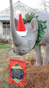 "Following a ""brush with death"", Spike the rhino has fully recovered and returned to his popular perch along NC 42 in Trap for all to see during the Christmas season."